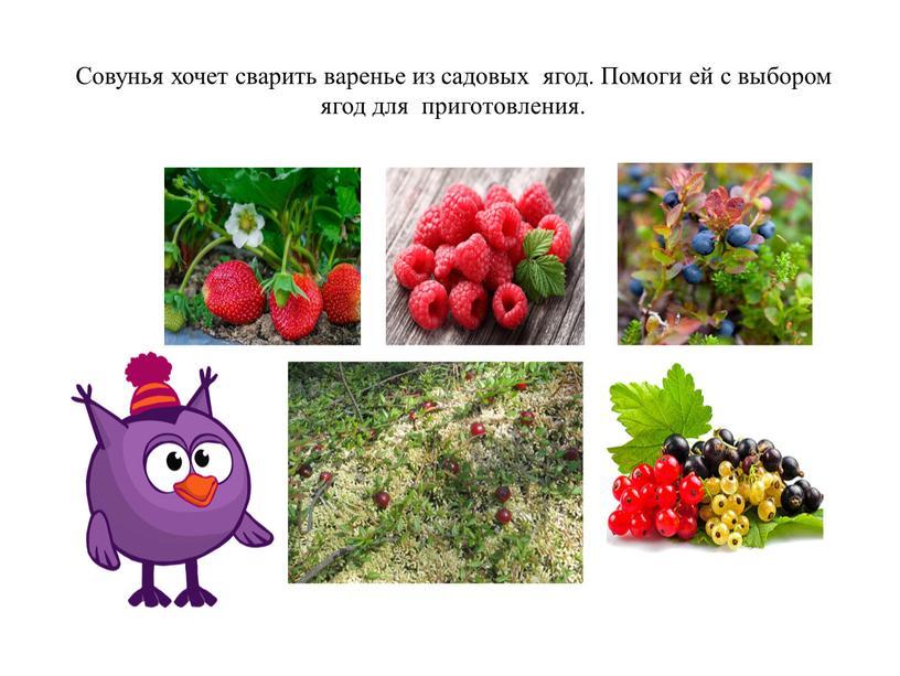 Совунья хочет сварить варенье из садовых ягод