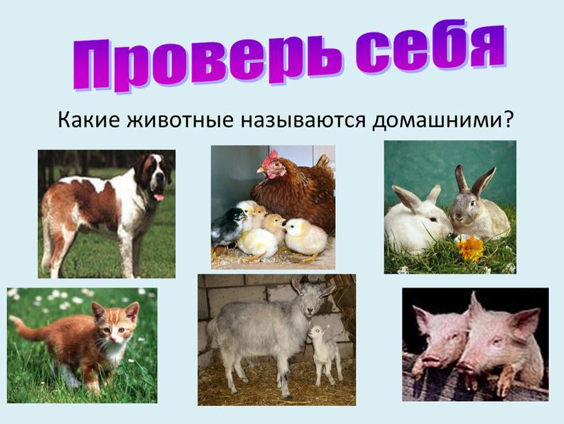 Какие животные называются домашними?