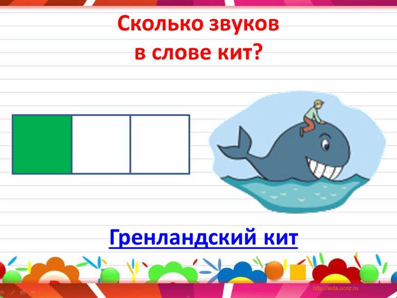 Сколько звуков в слове кит? Гренландский кит