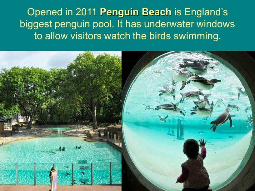 Opened in 2011 Penguin Beach is