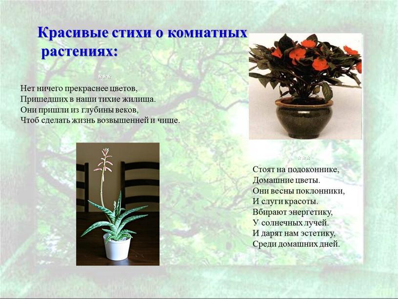 Красивые стихи о комнатных растениях: ***