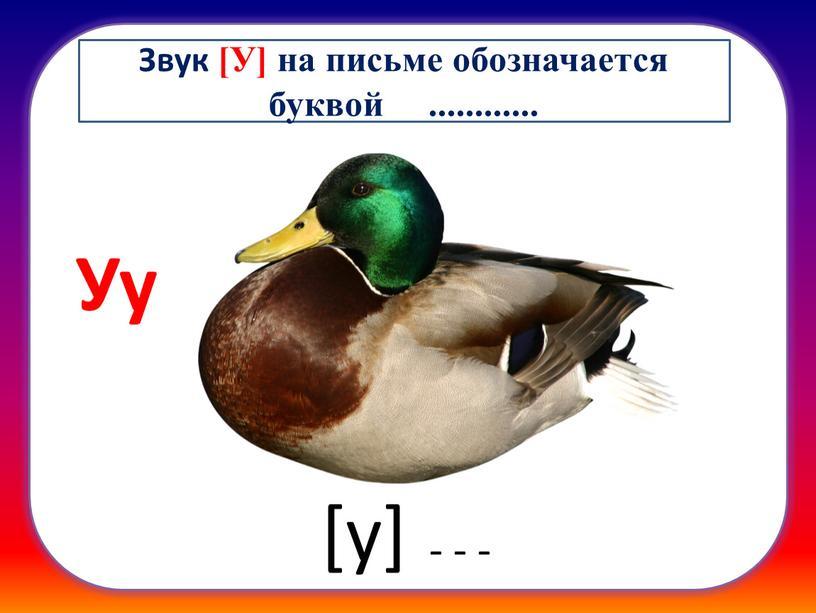 Уу [у] - - - Звук [У] на письме обозначается буквой