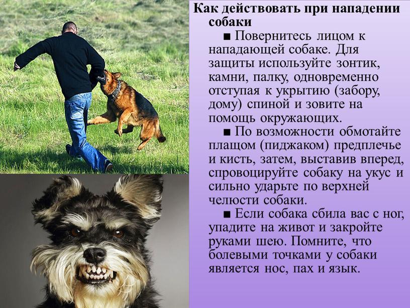 Как действовать при нападении собаки ■