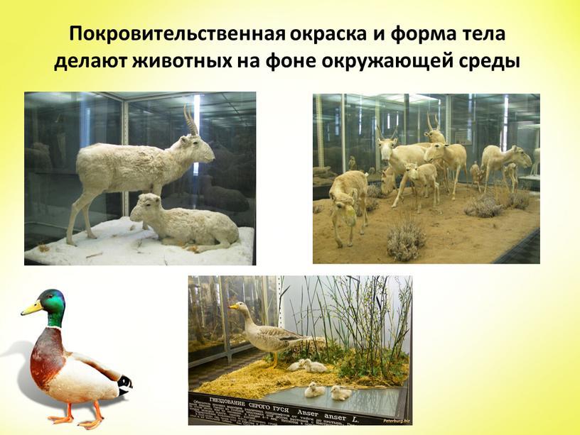 Покровительственная окраска и форма тела делают животных на фоне окружающей среды