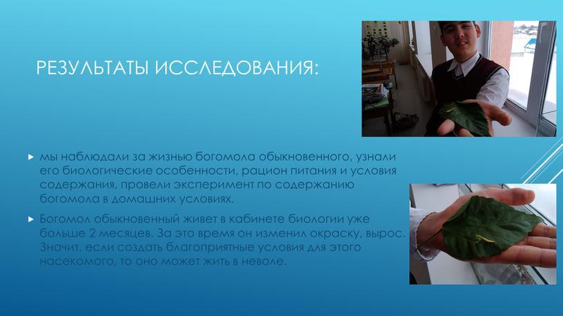 Результаты исследования: мы наблюдали за жизнью богомола обыкновенного, узнали его биологические особенности, рацион питания и условия содержания, провели эксперимент по содержанию богомола в домашних условиях