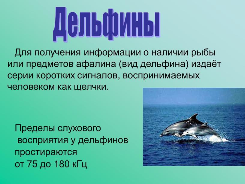 Для получения информации о наличии рыбы или предметов афалина (вид дельфина) издаёт серии коротких сигналов, воспринимаемых человеком как щелчки