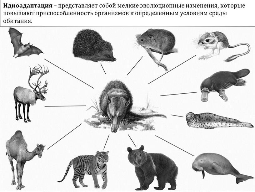 Идиоадаптация – представляет собой мелкие эволюционные изменения, которые повышают приспособленность организмов к определенным условиям среды обитания