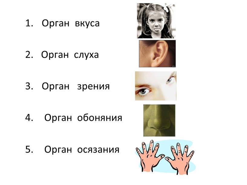 Орган вкуса 2. Орган слуха