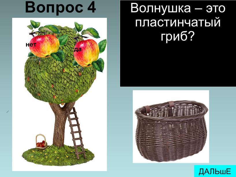 Вопрос 4 ДАЛЬшЕ Волнушка – это пластинчатый гриб?