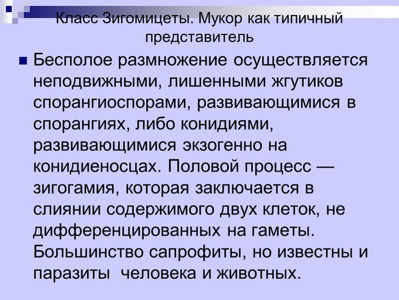 Класс Зигомицеты. Мукор как типичный представитель
