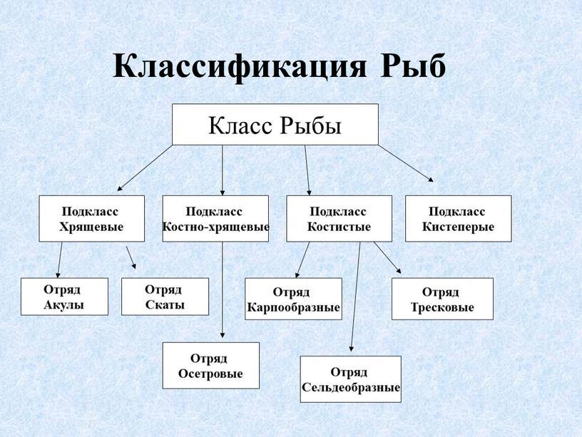 Классификация Рыб Класс Рыбы Подкласс