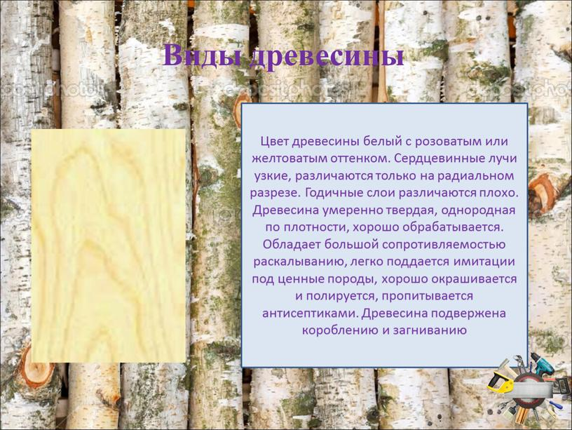 Виды древесины Цвет древесины белый с розоватым или желтоватым оттенком
