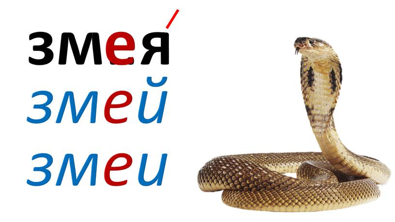 зм .. я змей змеи е