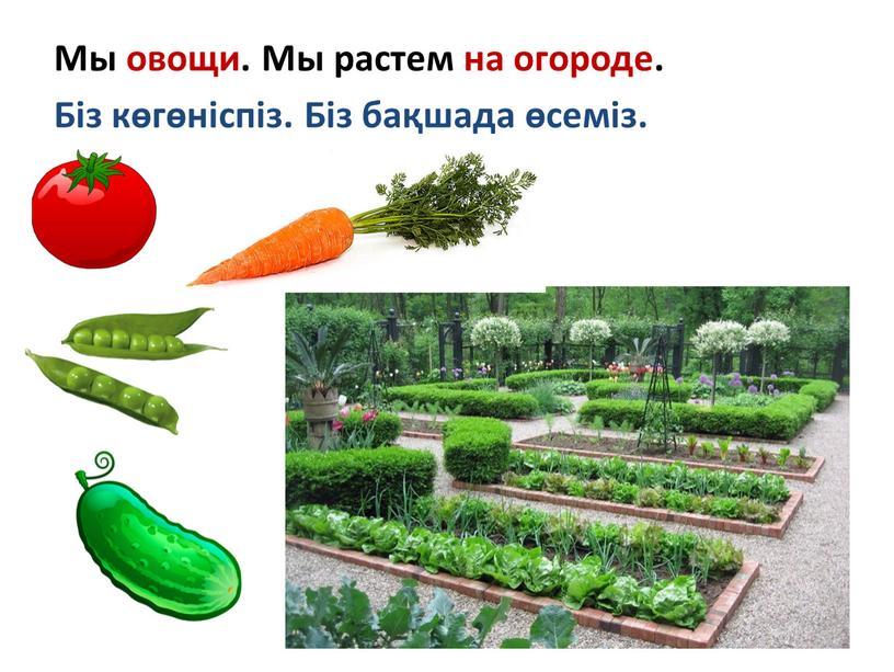 Мы овощи. Мы растем на огороде