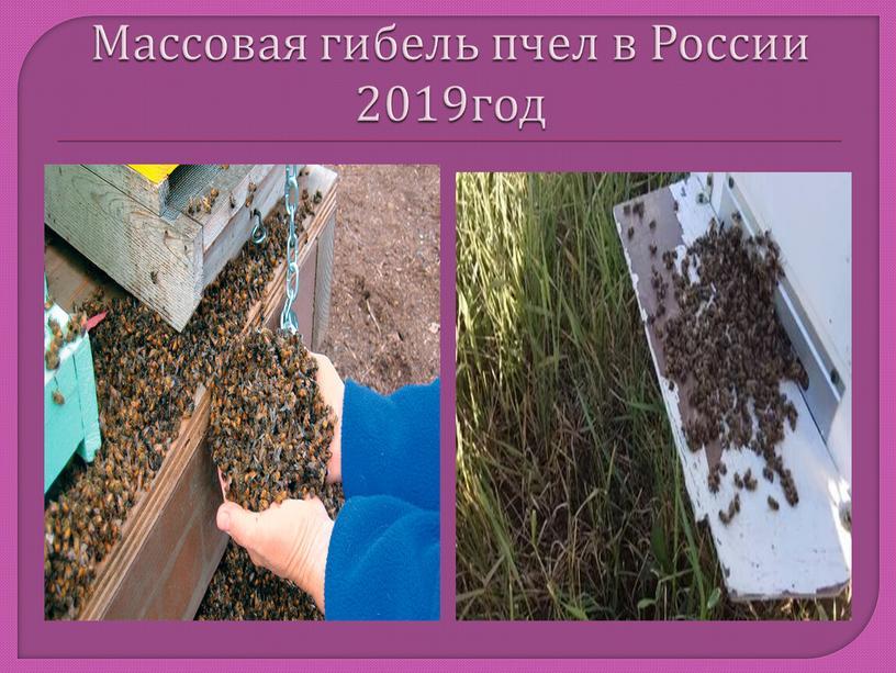 Массовая гибель пчел в России 2019год