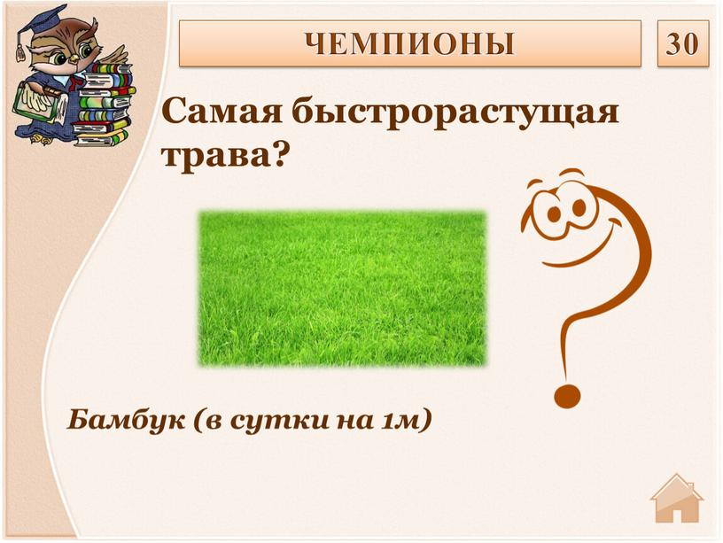 Бамбук (в сутки на 1м) Самая быстрорастущая трава?