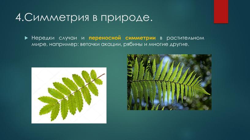 Симметрия в природе. Нередки случаи и переносной симметрии в растительном мире, например: веточки акации, рябины и многие другие