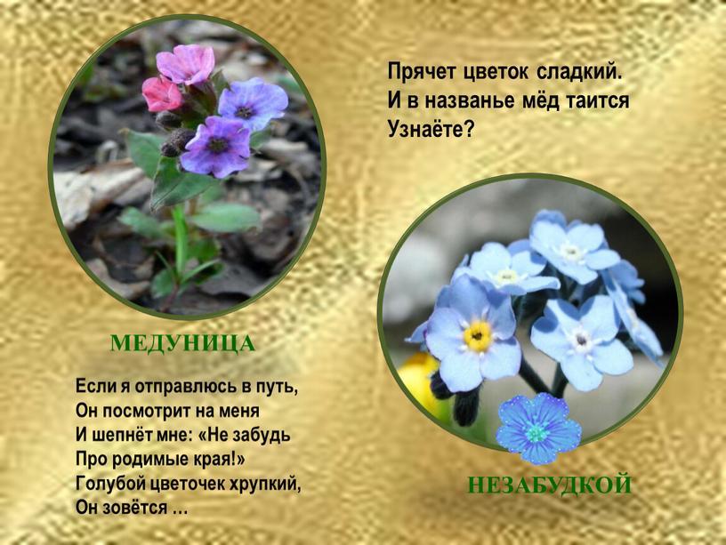 Прячет цветок сладкий. И в названье мёд таится