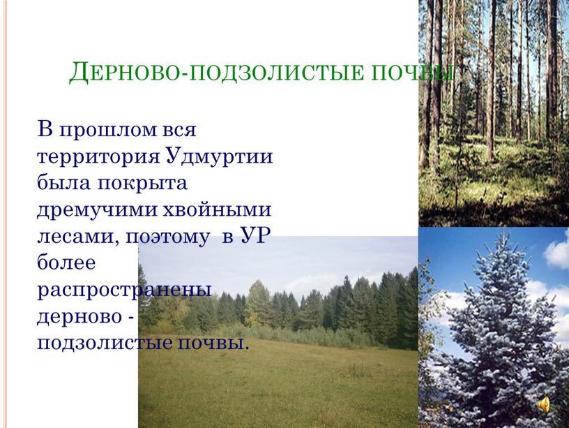 Дерново-подзолистые почвы В прошлом вся территория