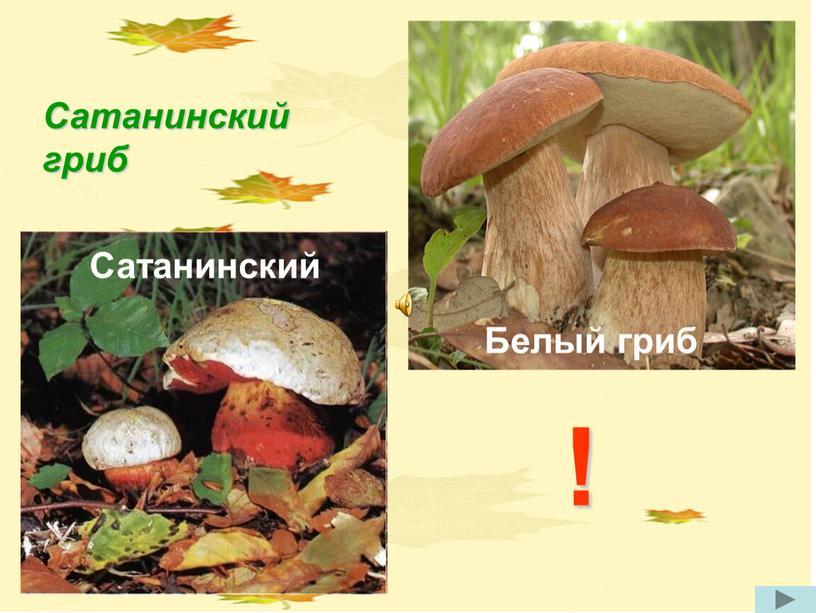 Сатанинский ! Сатанинский гриб
