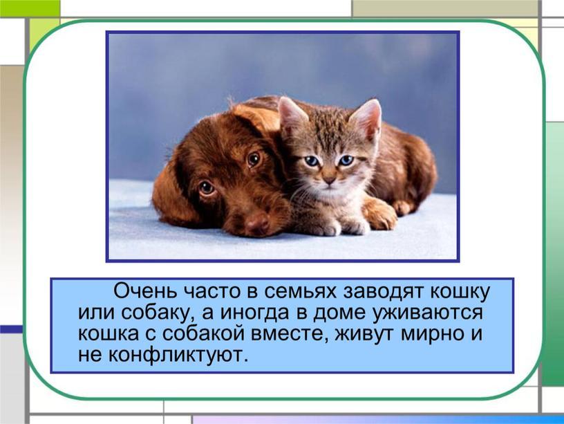 Очень часто в семьях заводят кошку или собаку, а иногда в доме уживаются кошка с собакой вместе, живут мирно и не конфликтуют
