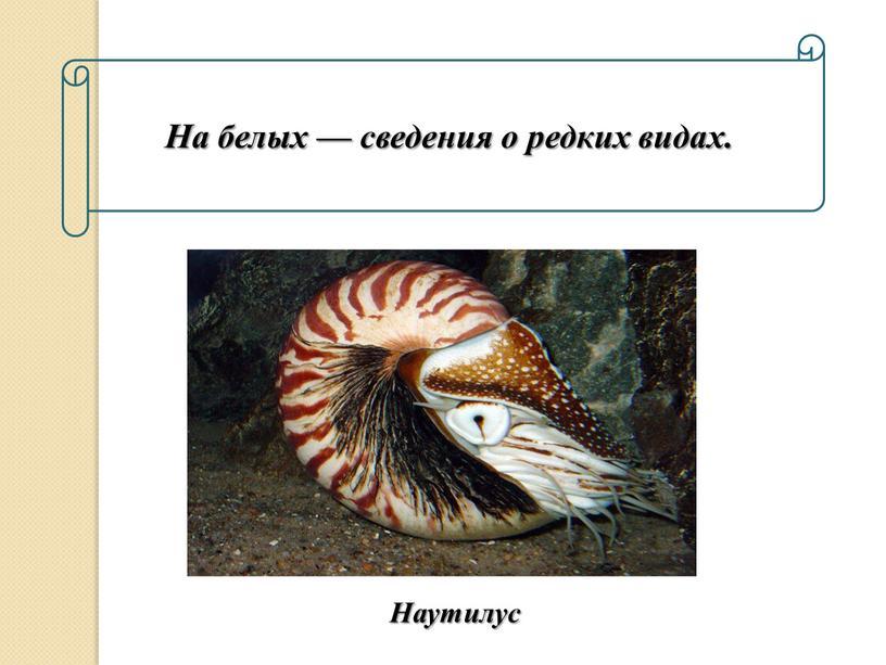 На белых — сведения о редких видах