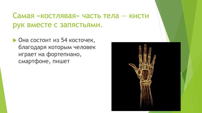Самая «костлявая» часть тела — кисти рук вместе с запястьями