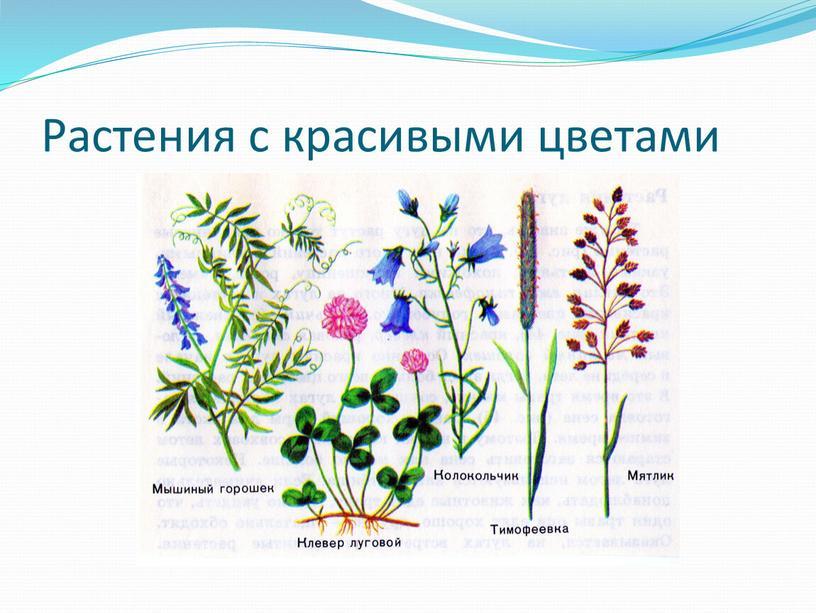 Растения с красивыми цветами