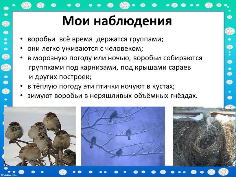 Мои наблюдения воробьи всё время держатся группами; они легко уживаются с человеком; в морозную погоду или ночью, воробьи собираются группками под карнизами, под крышами сараев…