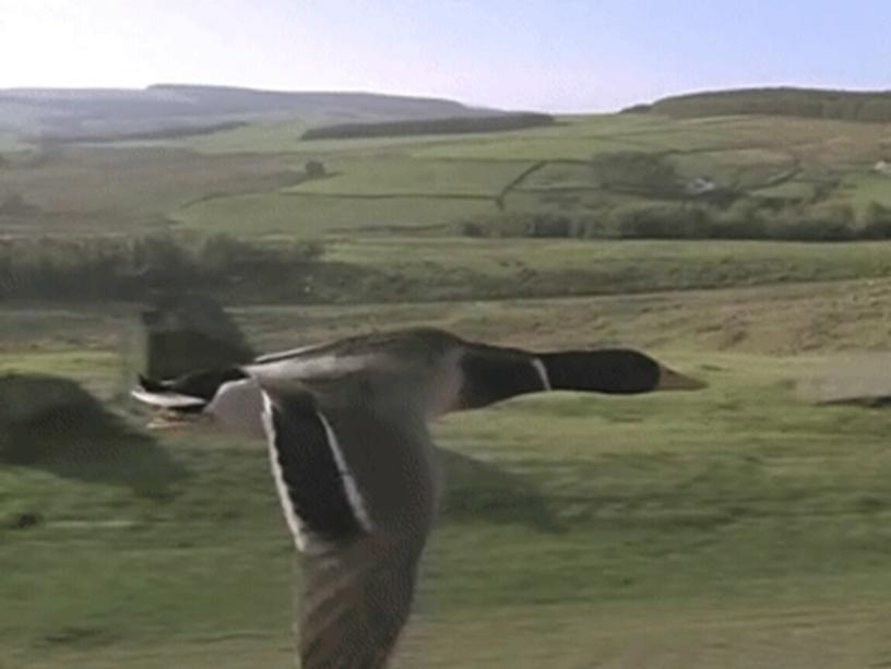 """Презентация на тему """"Мир птиц"""""""
