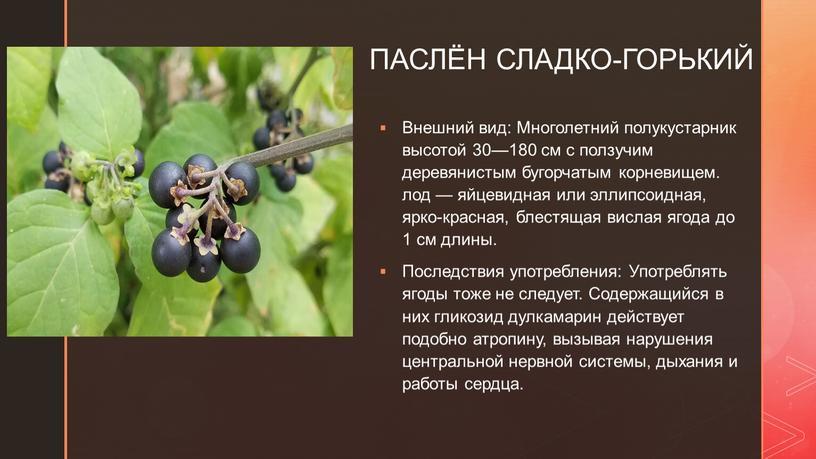 ПАСЛЁН СЛАДКО-ГОРЬКИЙ Внешний вид: