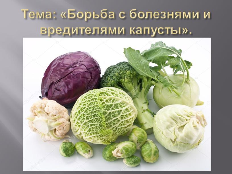 Тема: «Борьба с болезнями и вредителями капусты»