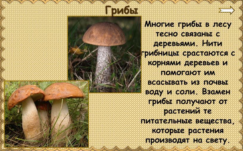 Многие грибы в лесу тесно связаны с деревьями