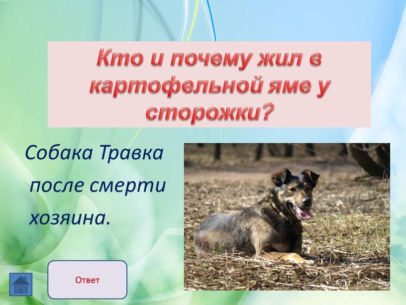 Собака Травка после смерти хозяина