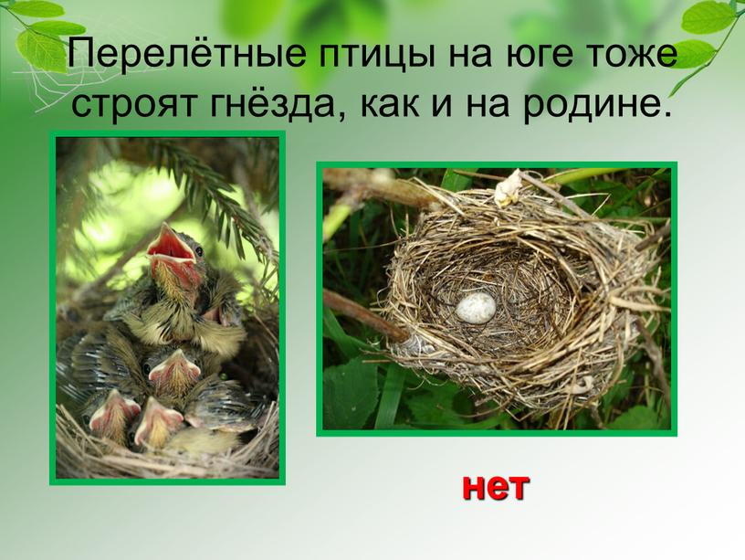 Перелётные птицы на юге тоже строят гнёзда, как и на родине