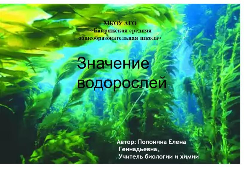 Значение водорослей МКОУ АГО «Бакряжская средняя общеобразовательная школа»