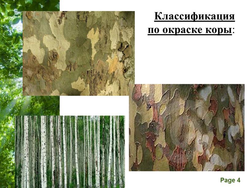 Классификация по окраске коры :