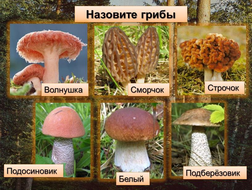 Назовите грибы Волнушка Сморчок