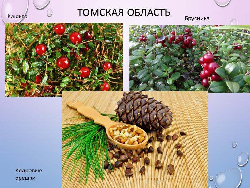 Томская область Клюква Брусника