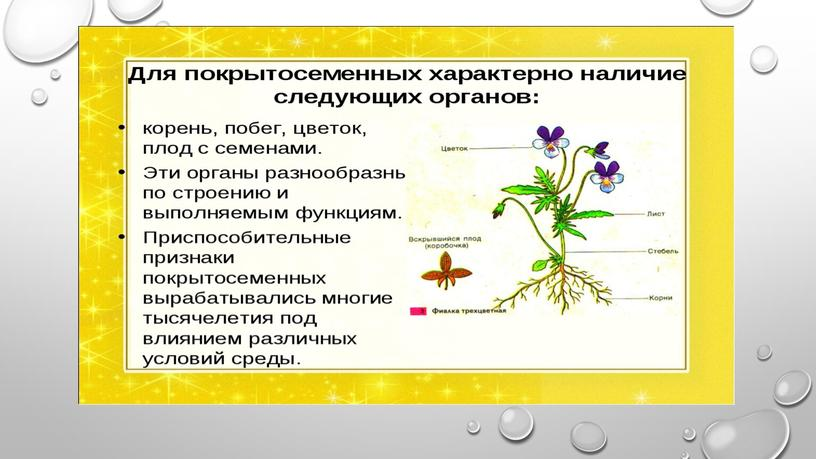 """Презентация """" Покрытосеменные растения и их значение"""""""