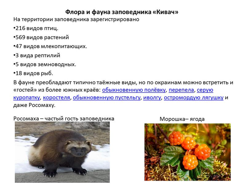Флора и фауна заповедника «Кивач»