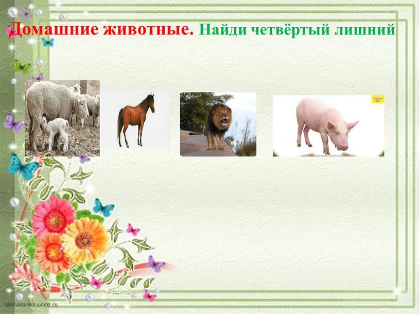 Домашние животные. Найди четвёртый лишний