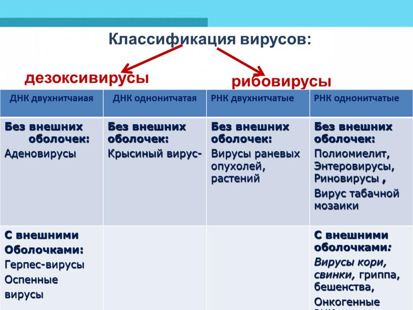 Классификация вирусов: дезоксивирусы рибовирусы