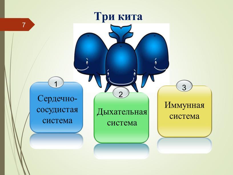 Три кита Сердечно- сосудистая система