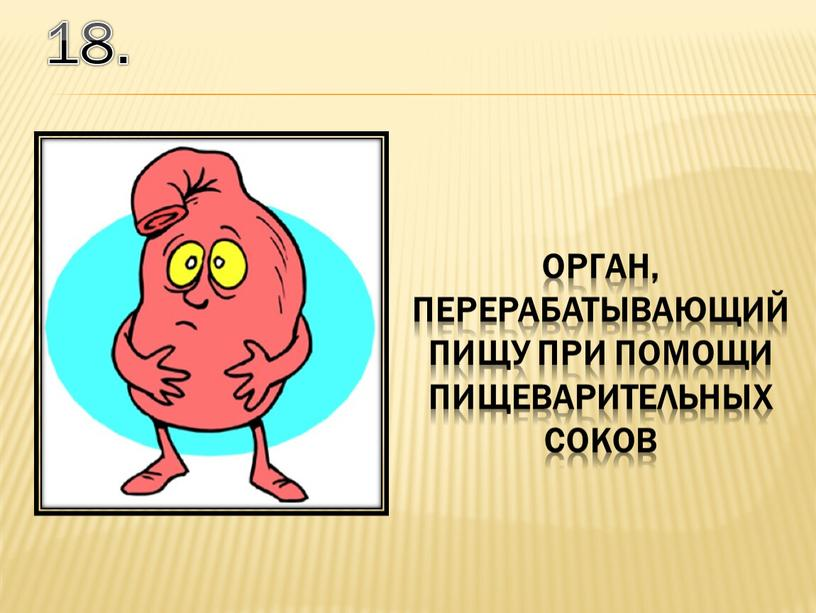 18. орган, перерабатывающий пищу при помощи пищеварительных соков