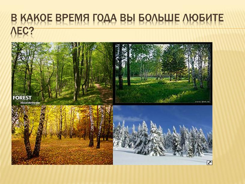 В какое время года вы больше любите лес?