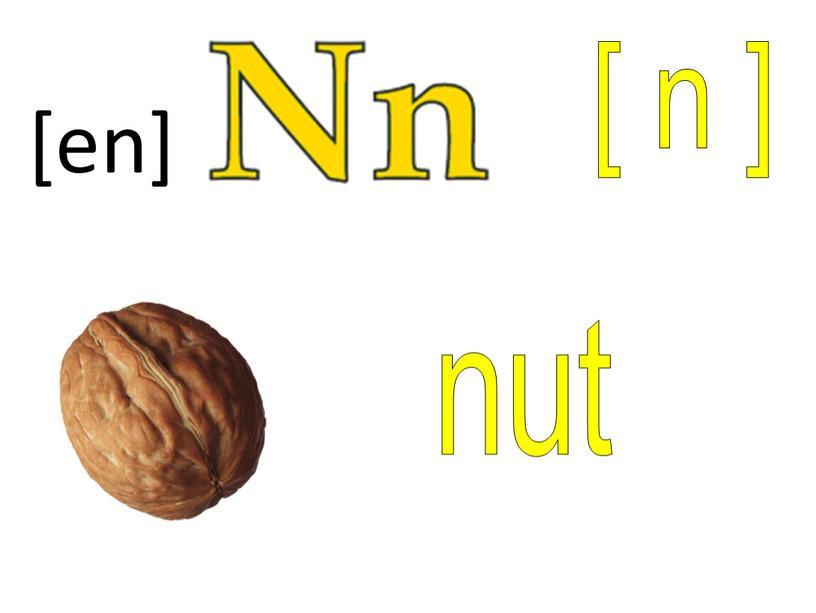 [ n ] nut [en]