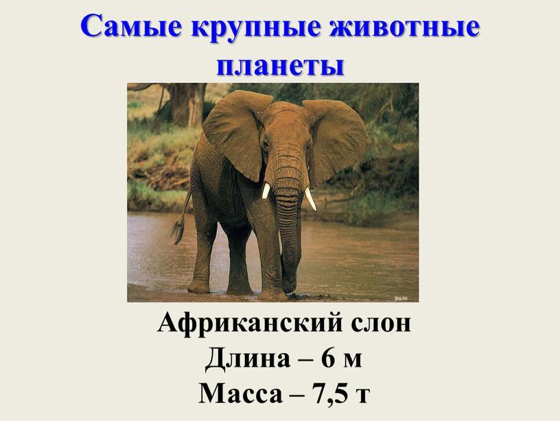 Самые крупные животные планеты