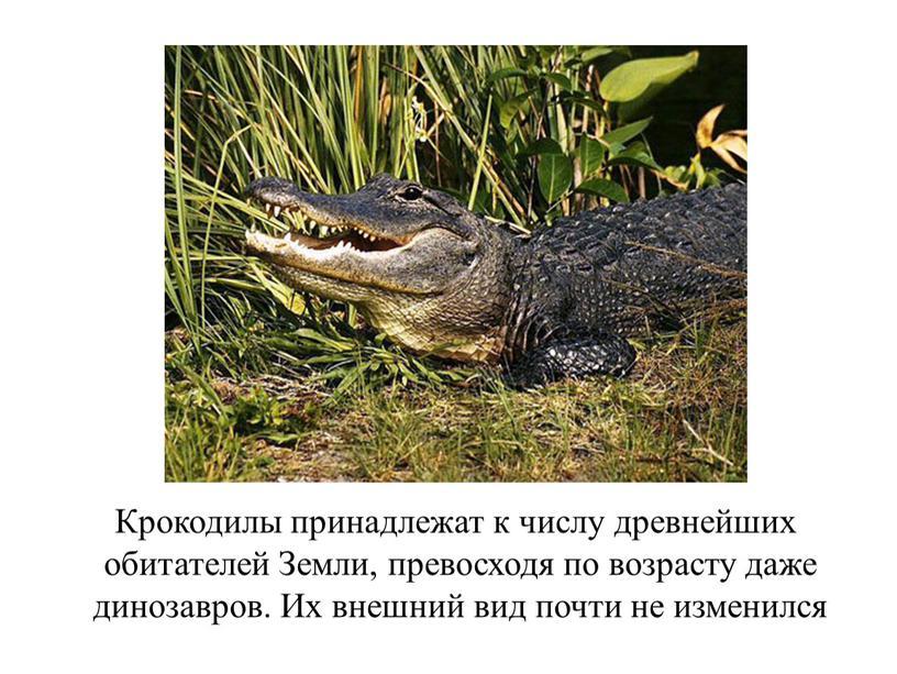 Крокодилы принадлежат к числу древнейших обитателей