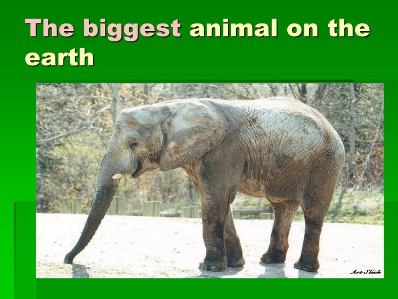 The biggest animal on the earth